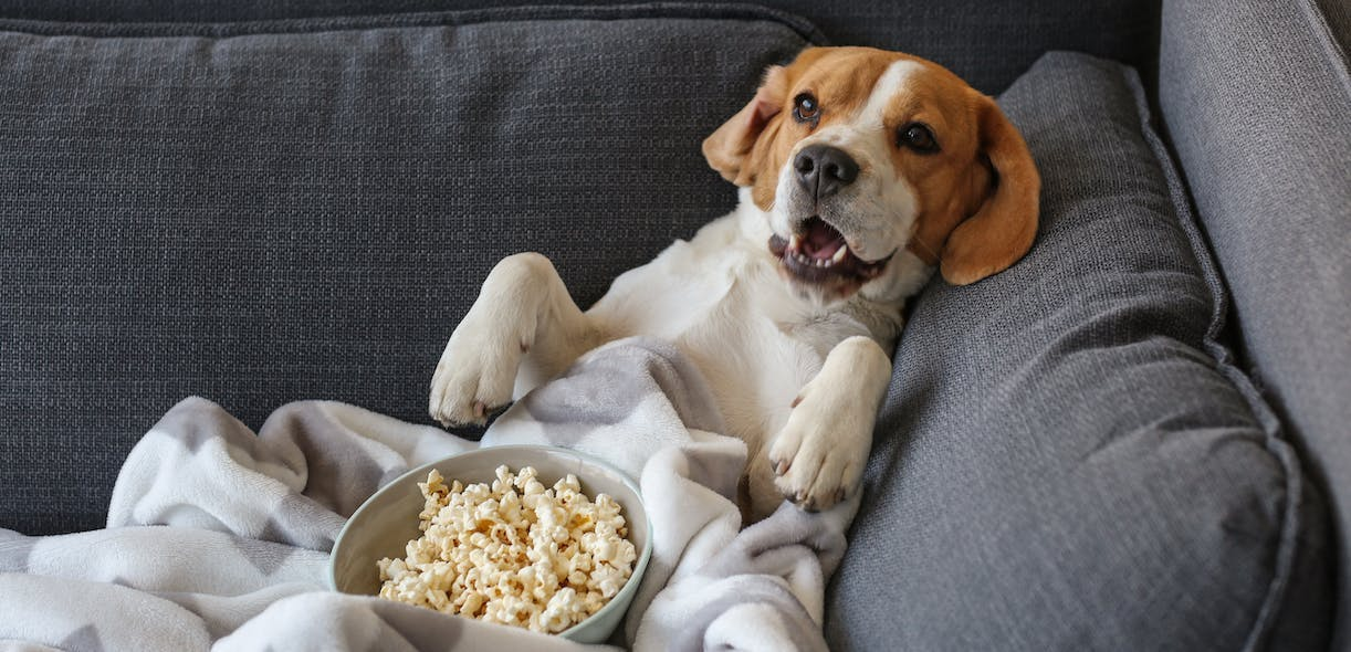 Top 5 films about dogs