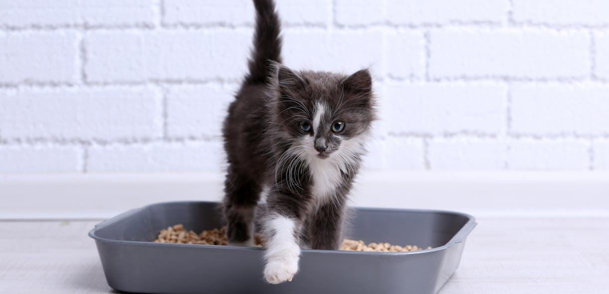 Alternative cat litters for the modern kitty