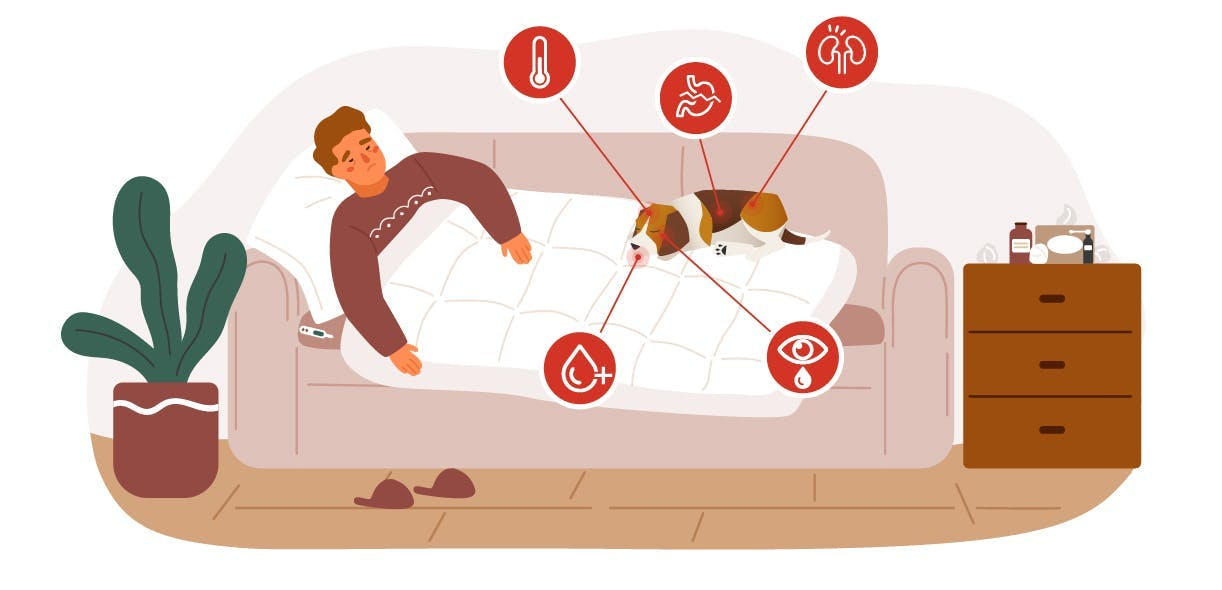 Leptospirosis: A serious disease which can affect you and your dog