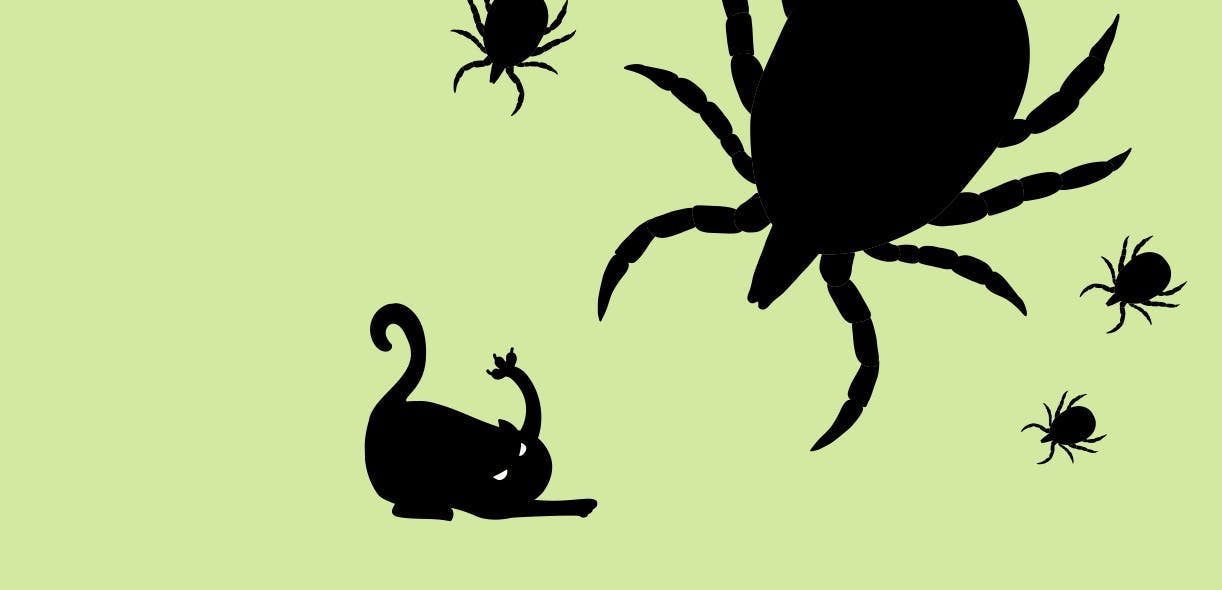 SOS: A tick wants to eat my cat!