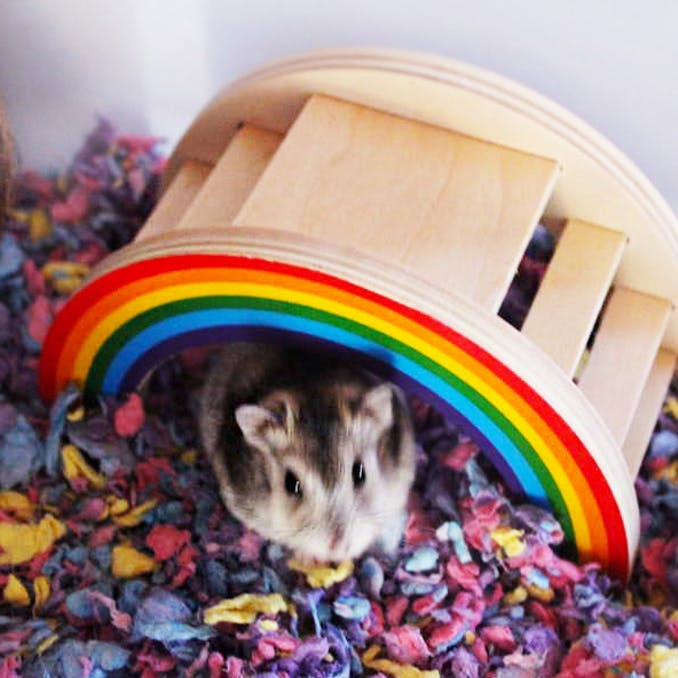 Somewhere over the (hamster's) rainbow