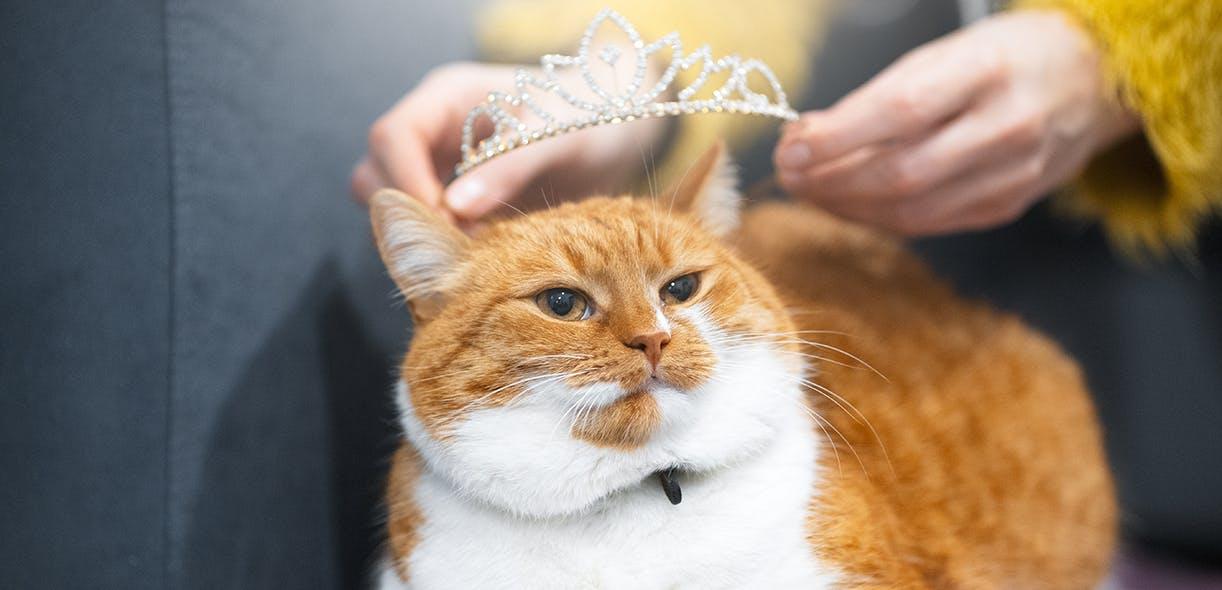 Freddie Mercury's dedication to his cats