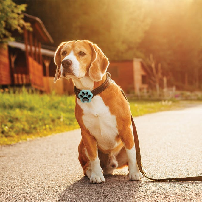 Track your dog's treks