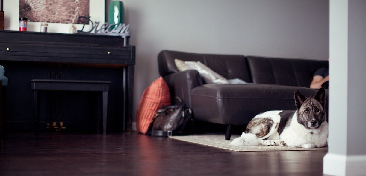 COVID-19: Doggie Survival Kit