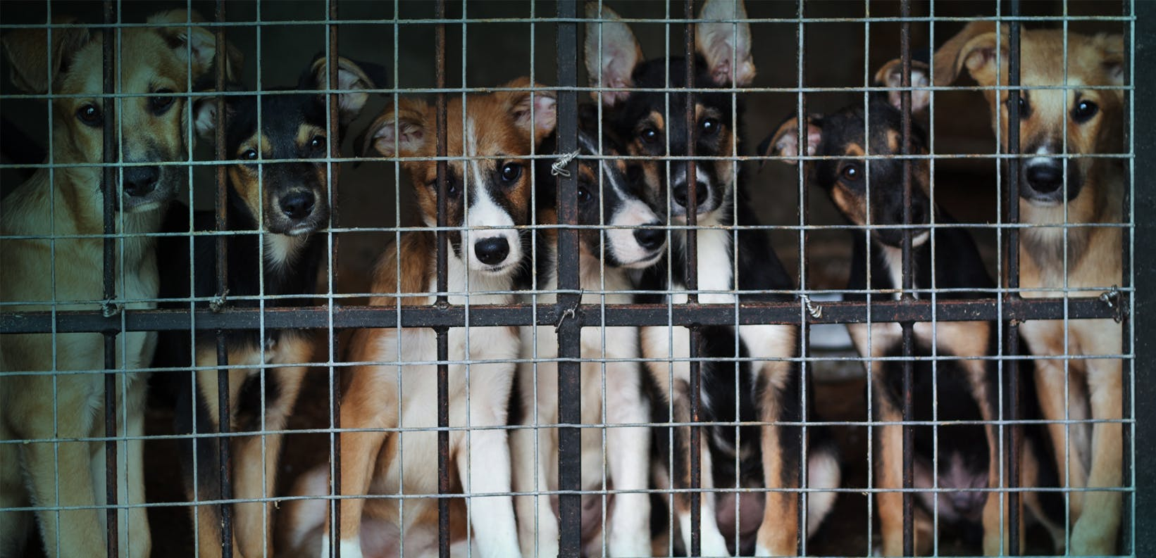 The thorny problem of puppy mills