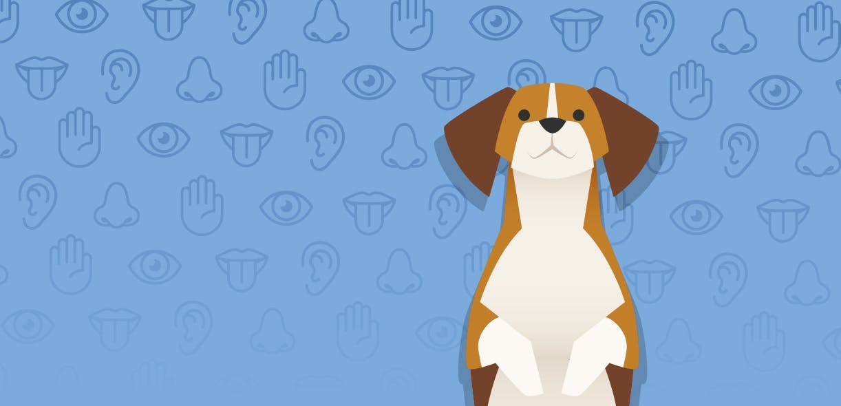 The 5 senses: Your dogs and yours