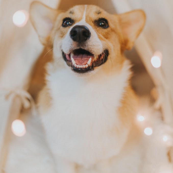 Is my dog really smiling?