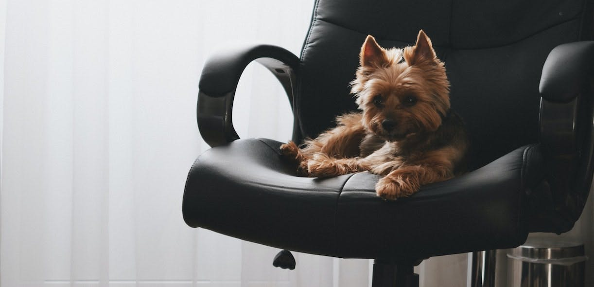 Preparing your pet for your return to the office