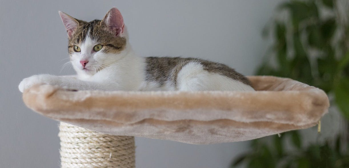 Cat accessories: Our top picks