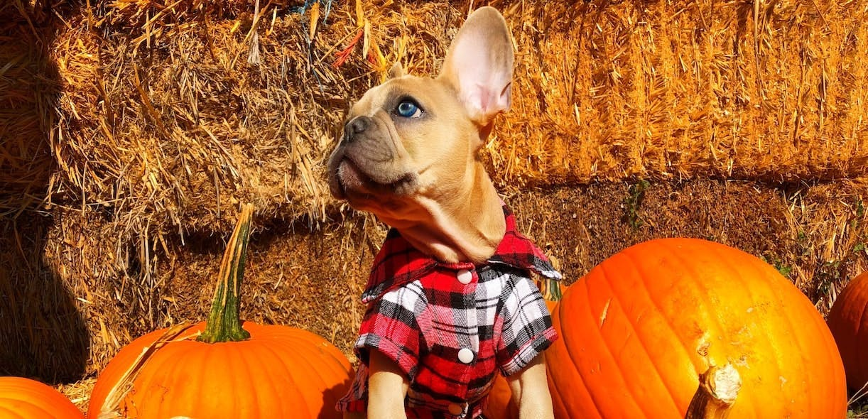 Fall food for Fido!