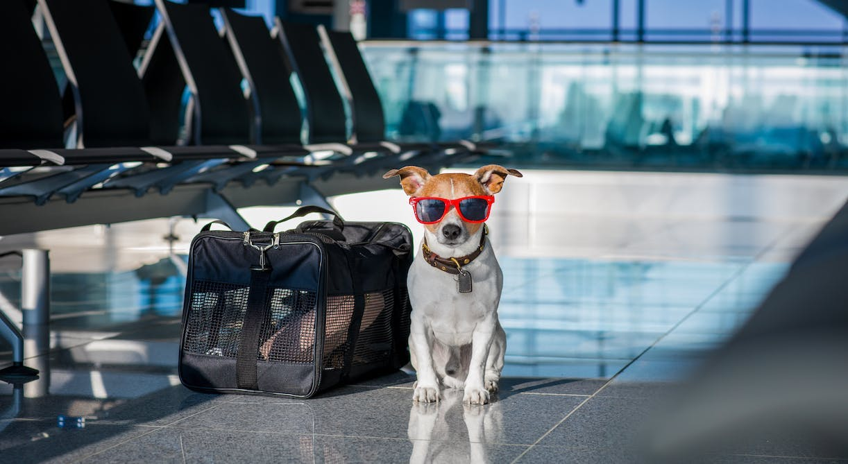Brief guide to air travel with your companion animal
