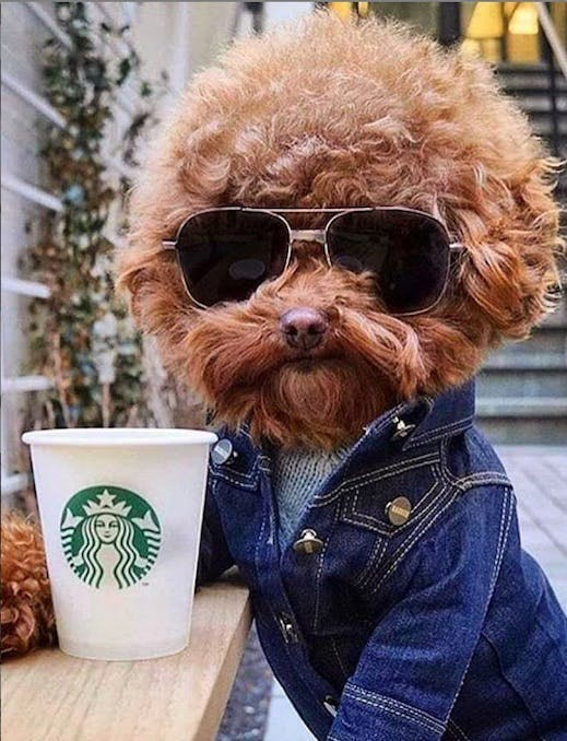 Would you like a puppuccino with that?