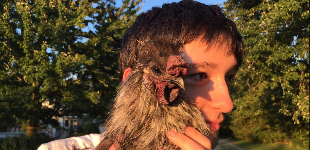 Healing with hens