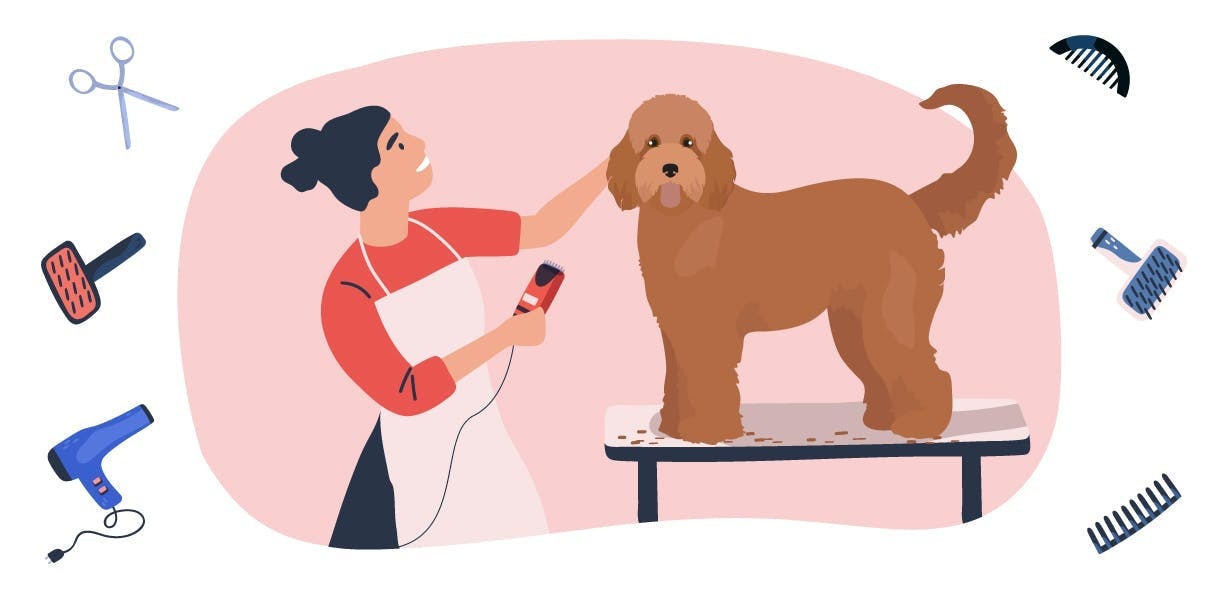 Grooming your (wonderful!) Doodle