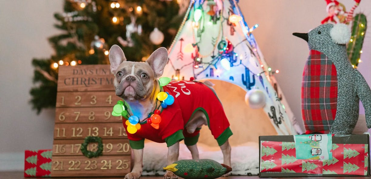 Gift ideas for dogs… and dog lovers