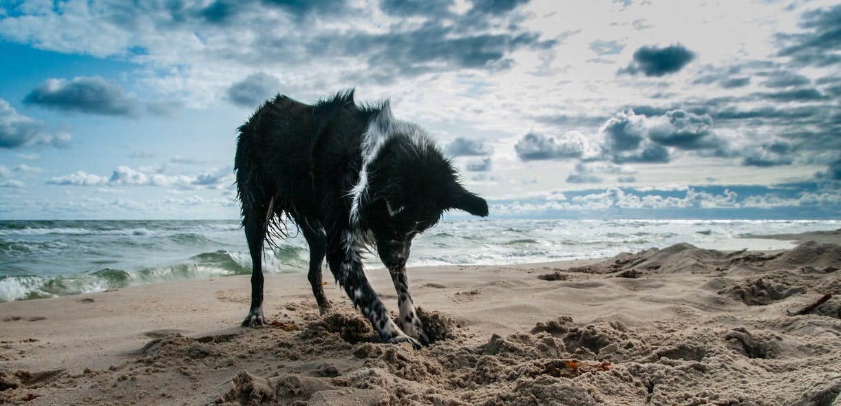 Is your dog looking for treasure when they dig in the ground?
