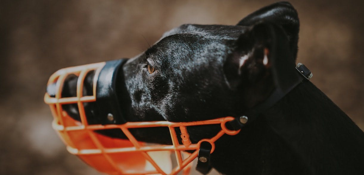 All about muzzles