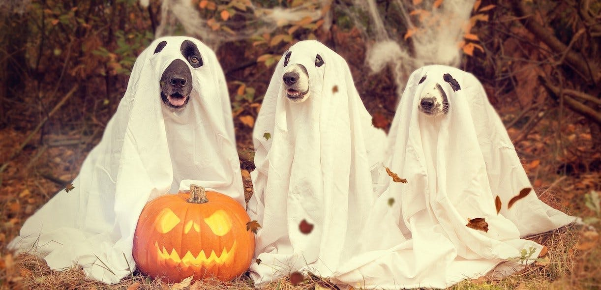 Four Halloween costume ideas for your furry friends