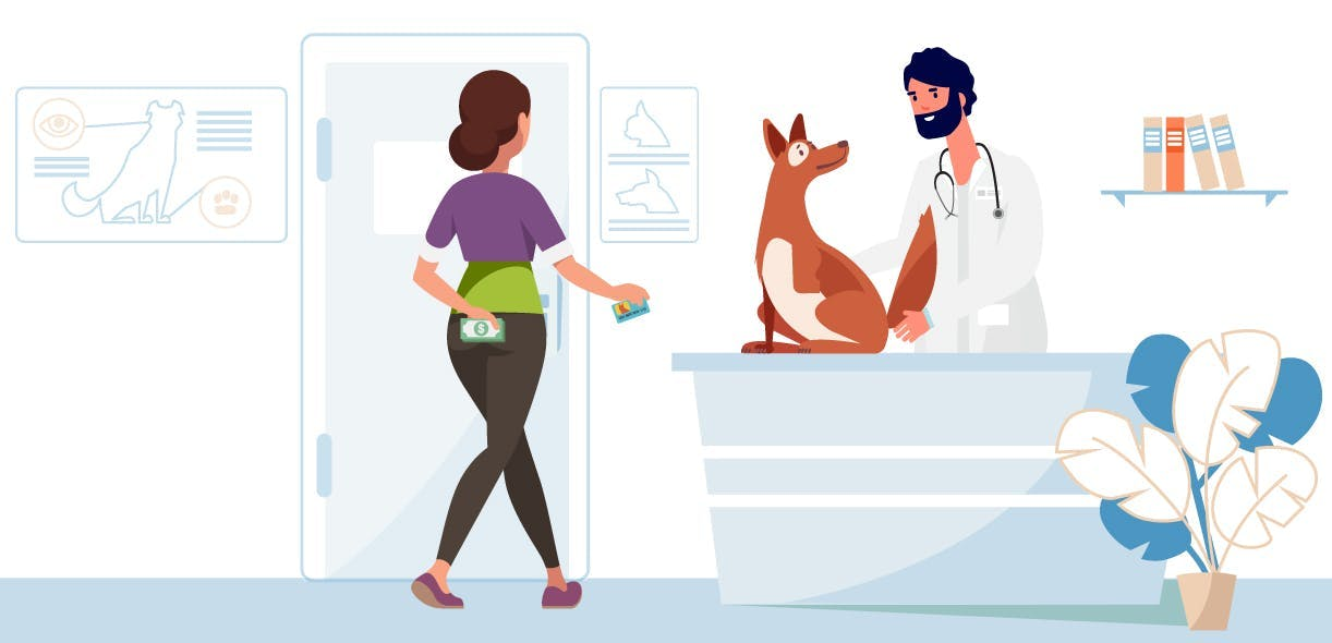 4 good reasons for insuring your pet