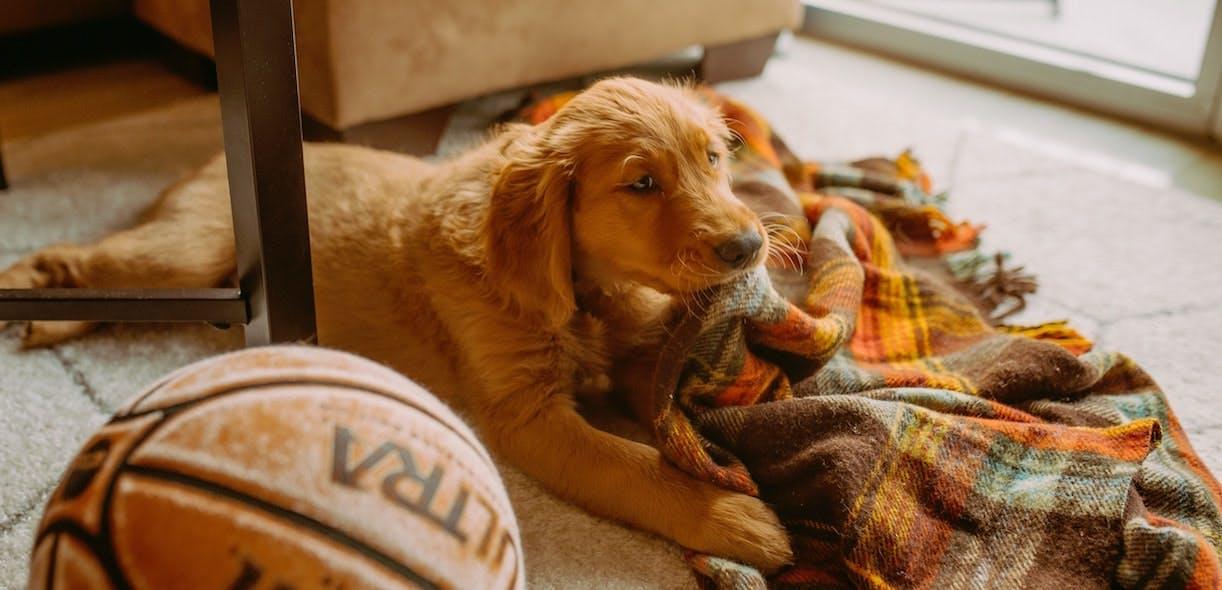 20 popular dog names