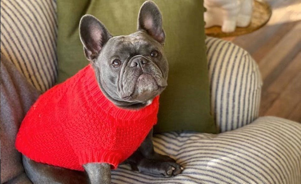 The cutest dogs and their American celebrity owners