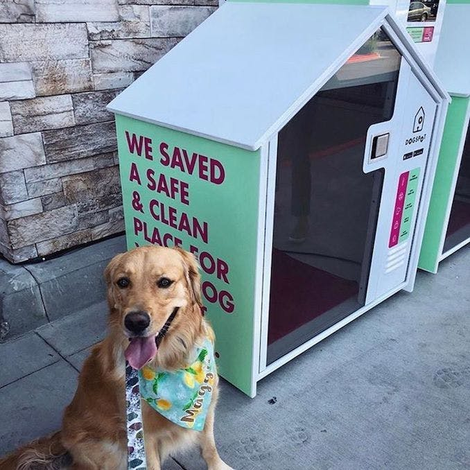 """The """"sidewalk sanctuaries"""" transforming city living with your dog"""
