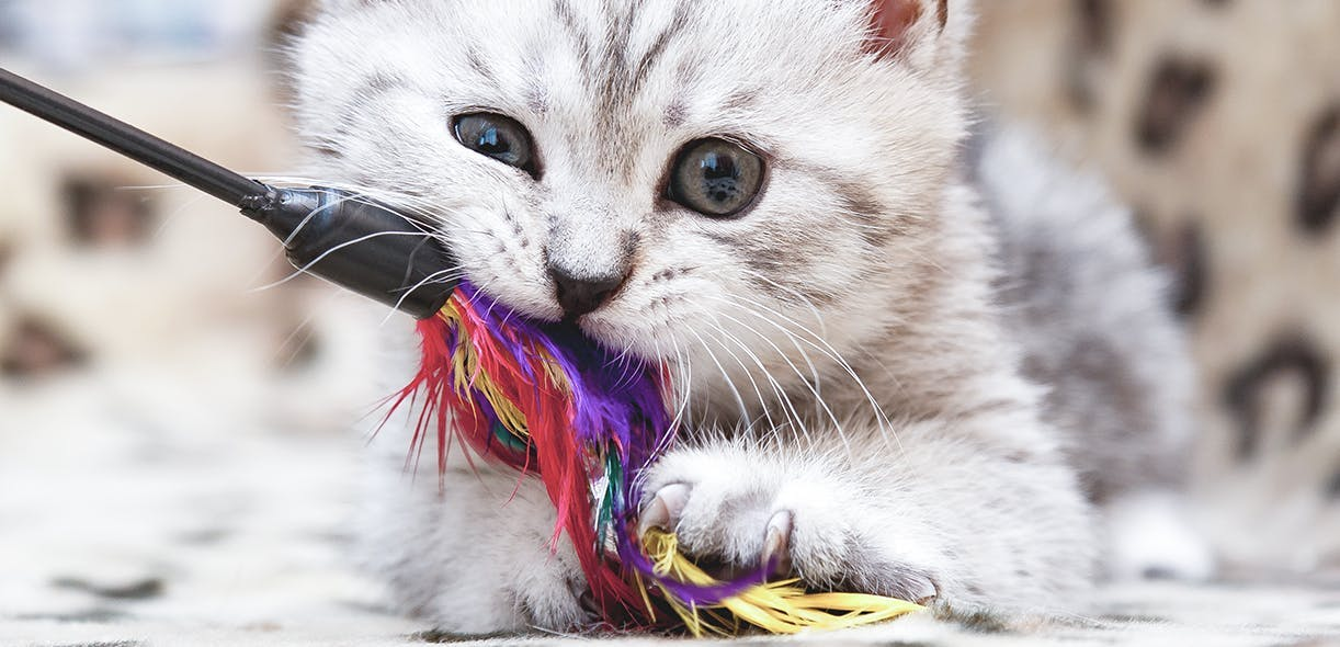 Your cat needs to play with you. Find out why.