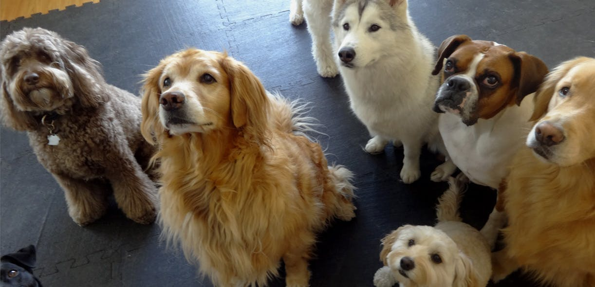 A day in the life of a dog daycare