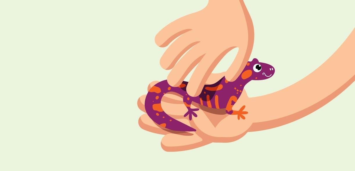 Salamander tales