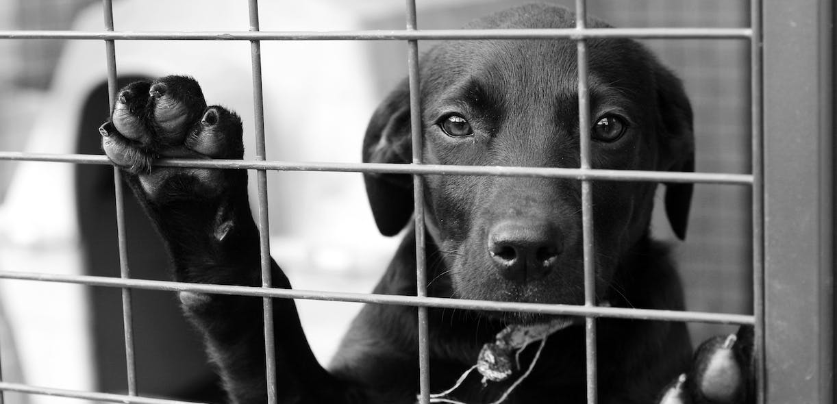 The effects of puppy mills