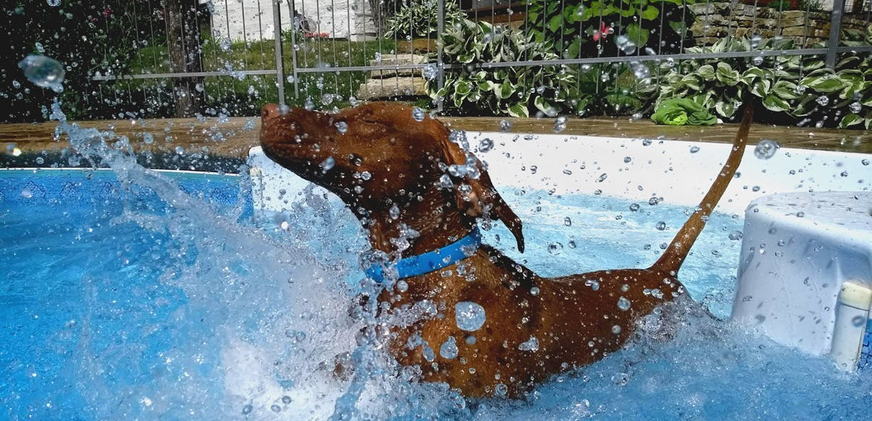 Safety tips for swimming with your dog