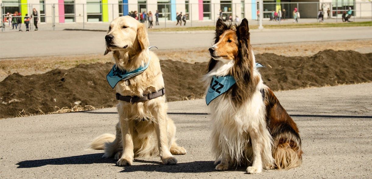Preventing dog bites, one workshop at a time