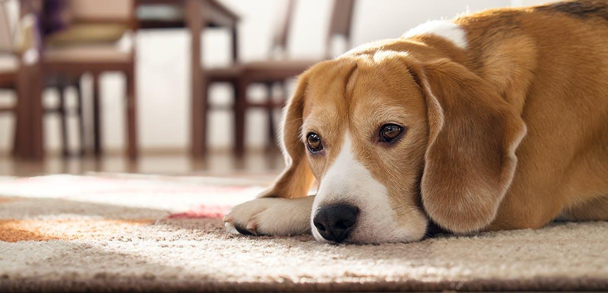 Docteur, mon chien m'ignore !