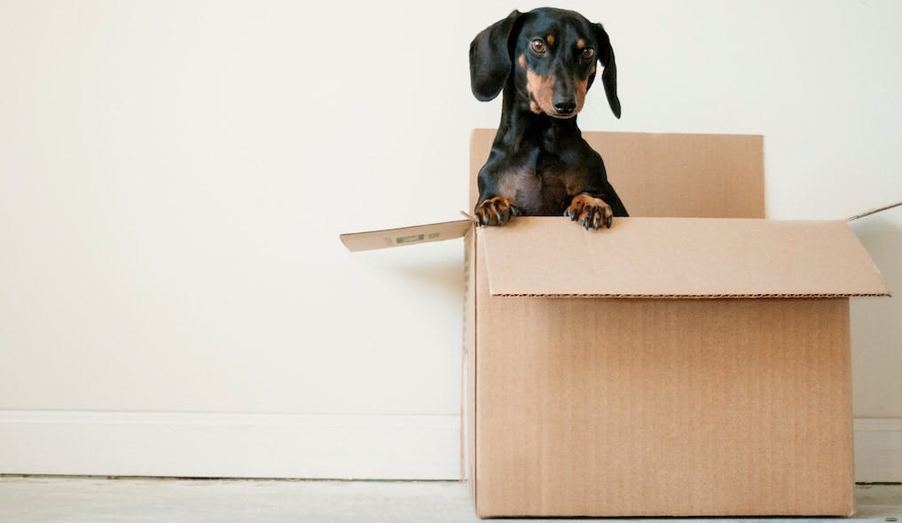 Renting with a pet: Know your rights