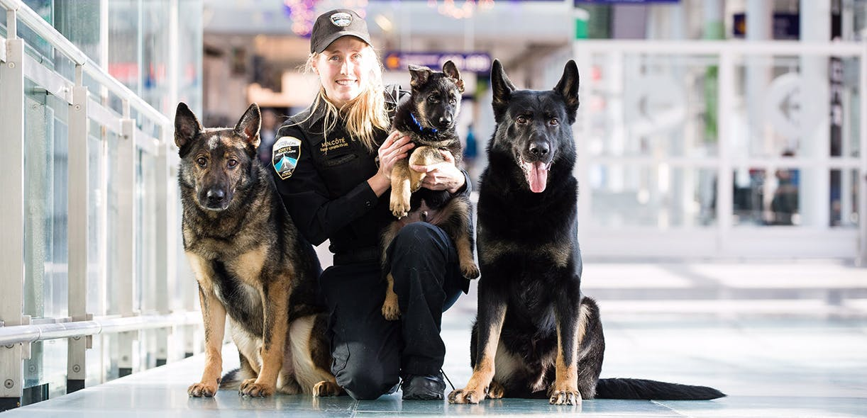 Sniffer dogs: Trained to keep you safe