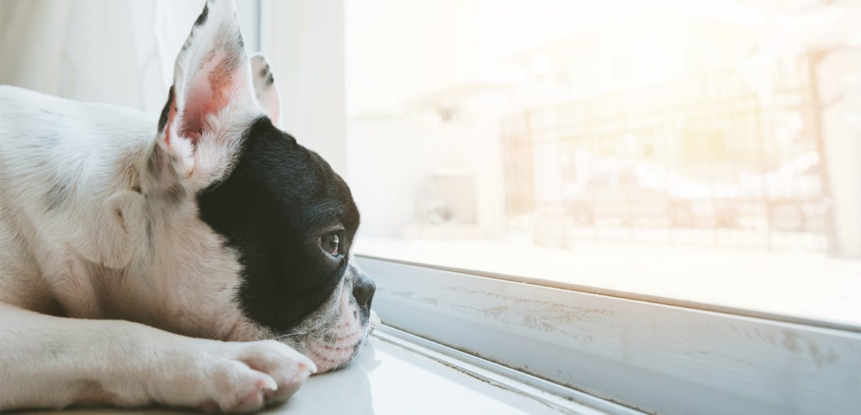 Separation anxiety: Tips to help your dog overcome his phobias