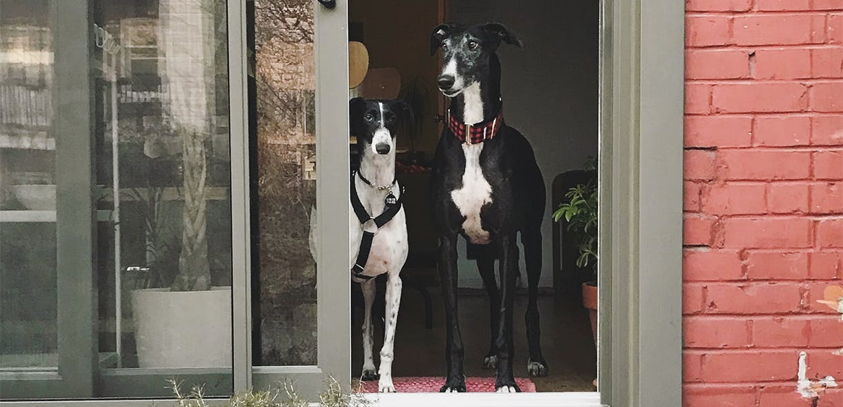 The courage of Galgos