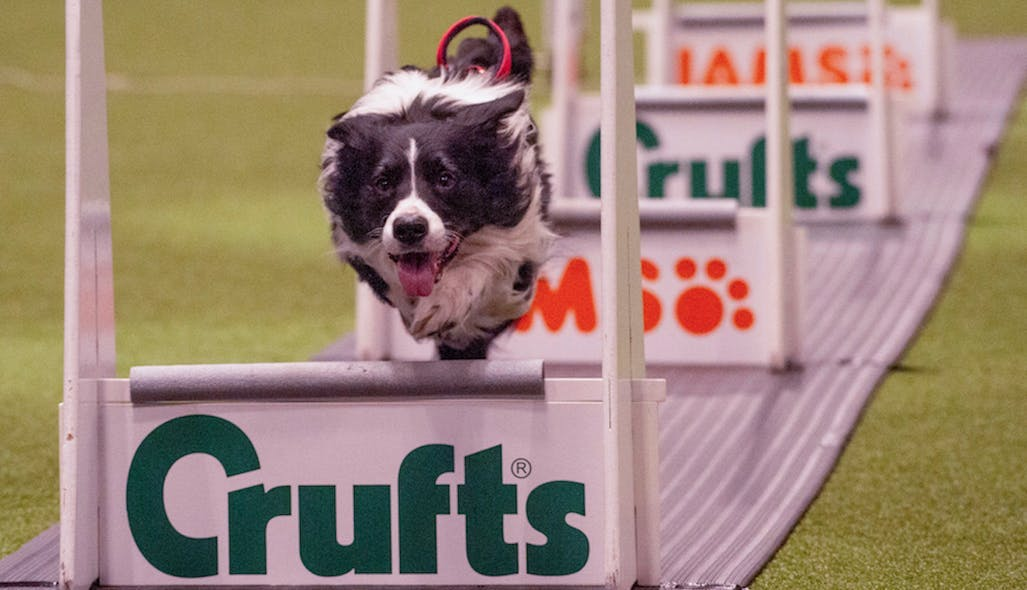 A taste of Crufts, the largest dog show in the world