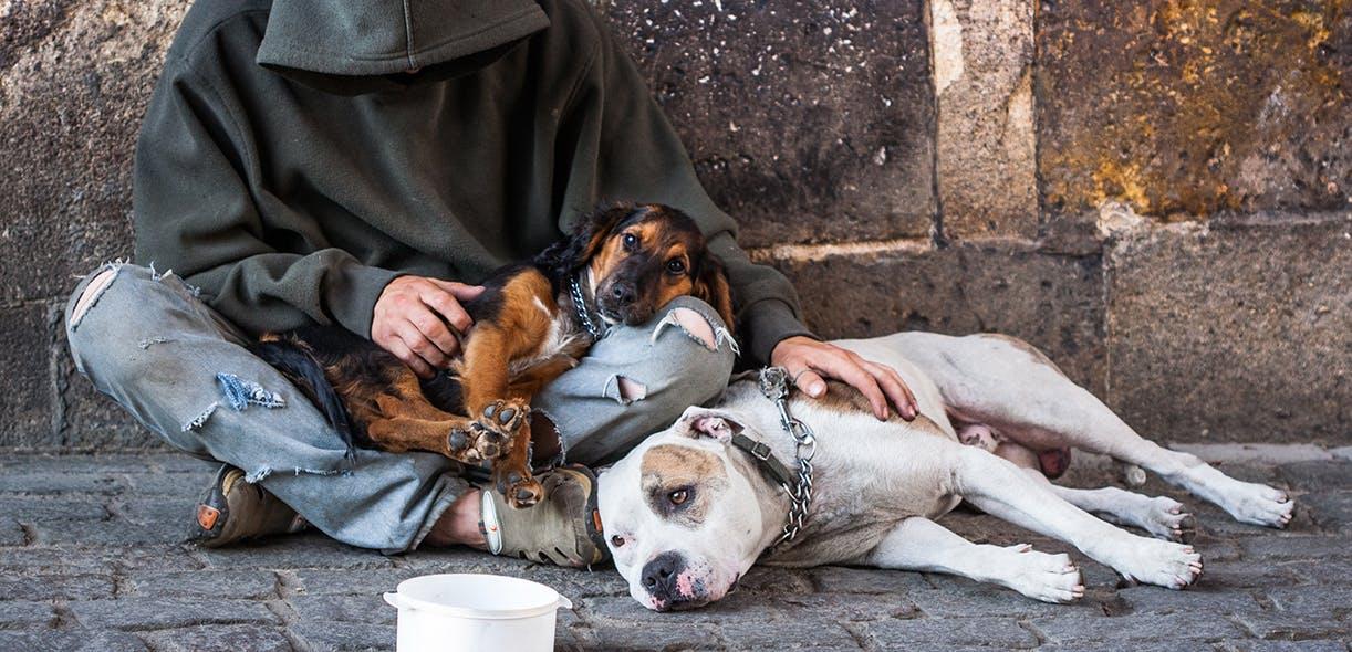 Are homeless companion dogs unhappy?
