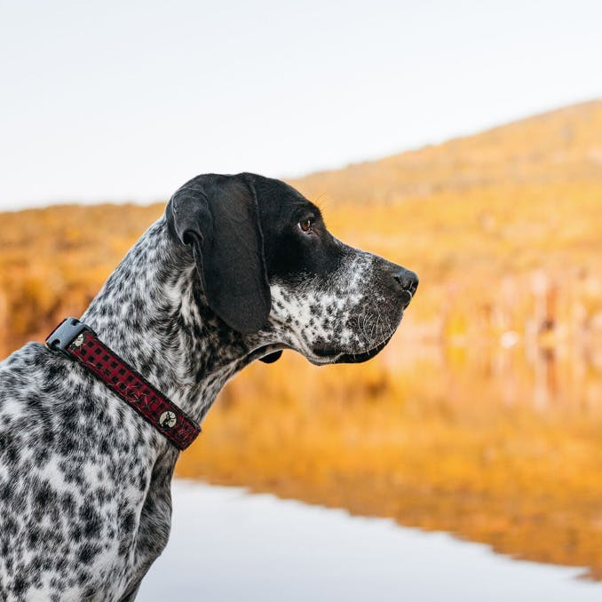 How to take great pictures of active dogs