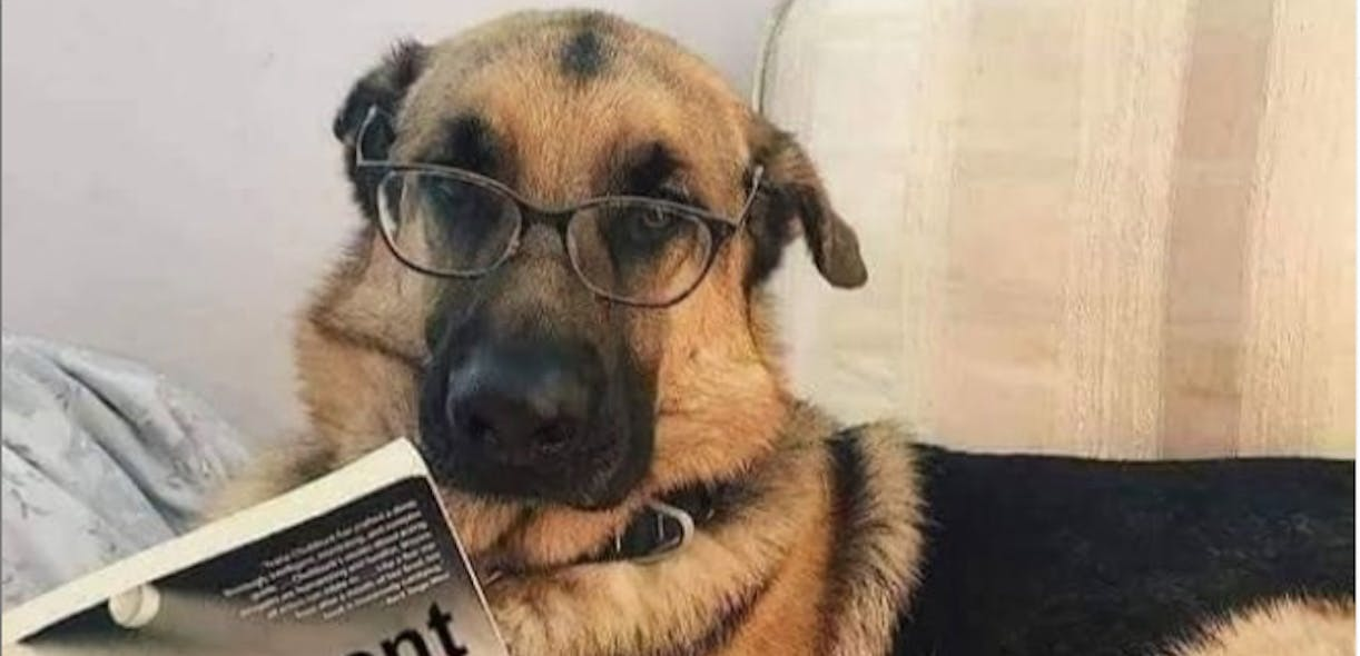 Canine kindergarten? Now available online!