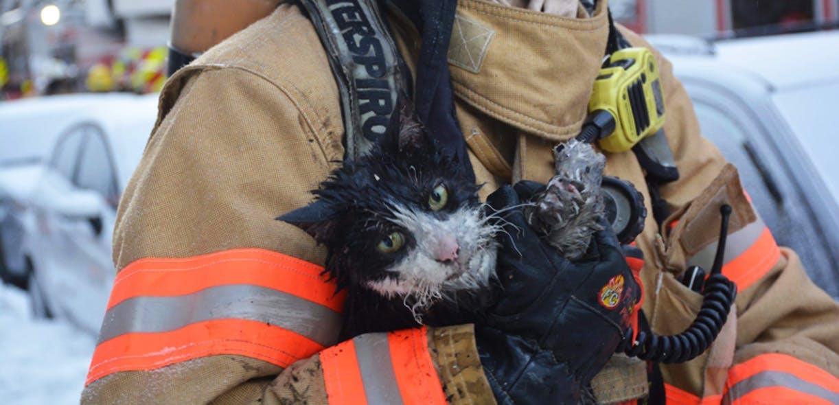 Firefighters: dedicated to human and animal life
