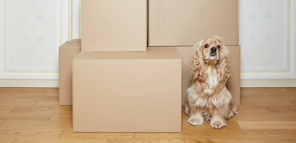 Moving homes with your pet: A short guide