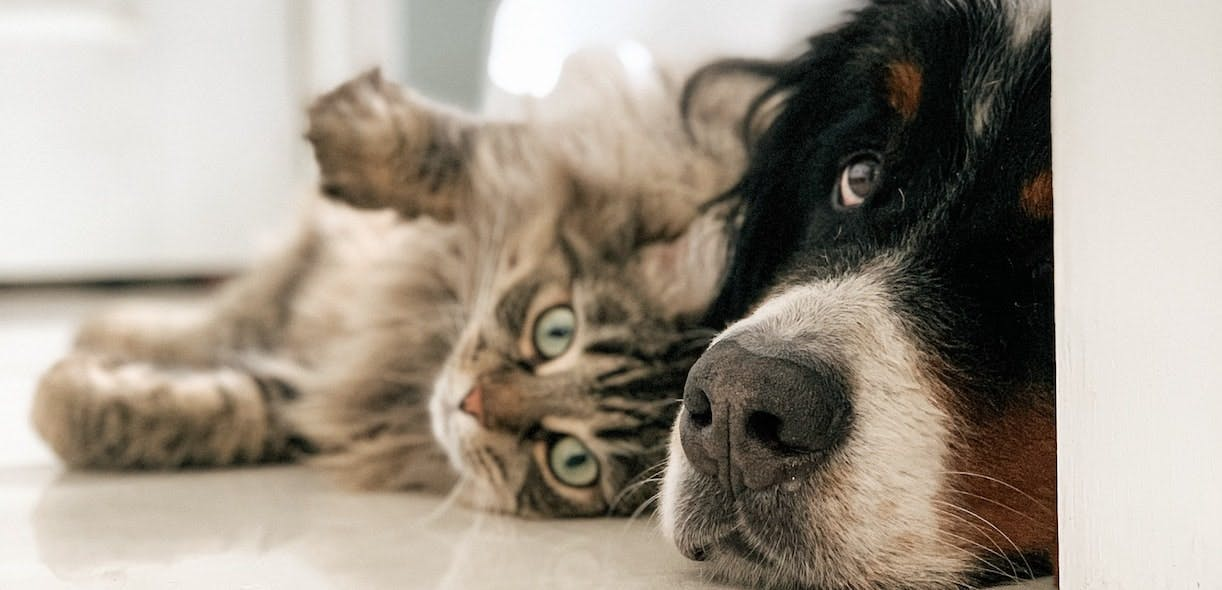 Gadgets that make life easier for pet owners