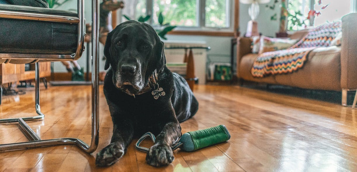 Dogs that detect bed bugs