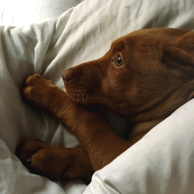 Why won't my puppy sleep at night?