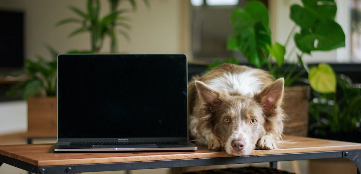 Buying an animal on the internet: Don't be fooled!