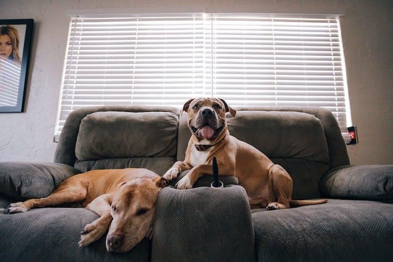 Q&A - What is the Coronavirus impact on pet health?