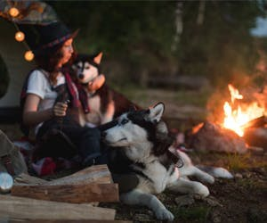 12 practical items when camping with your cat and dog