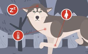 The right tactics for a tick attack